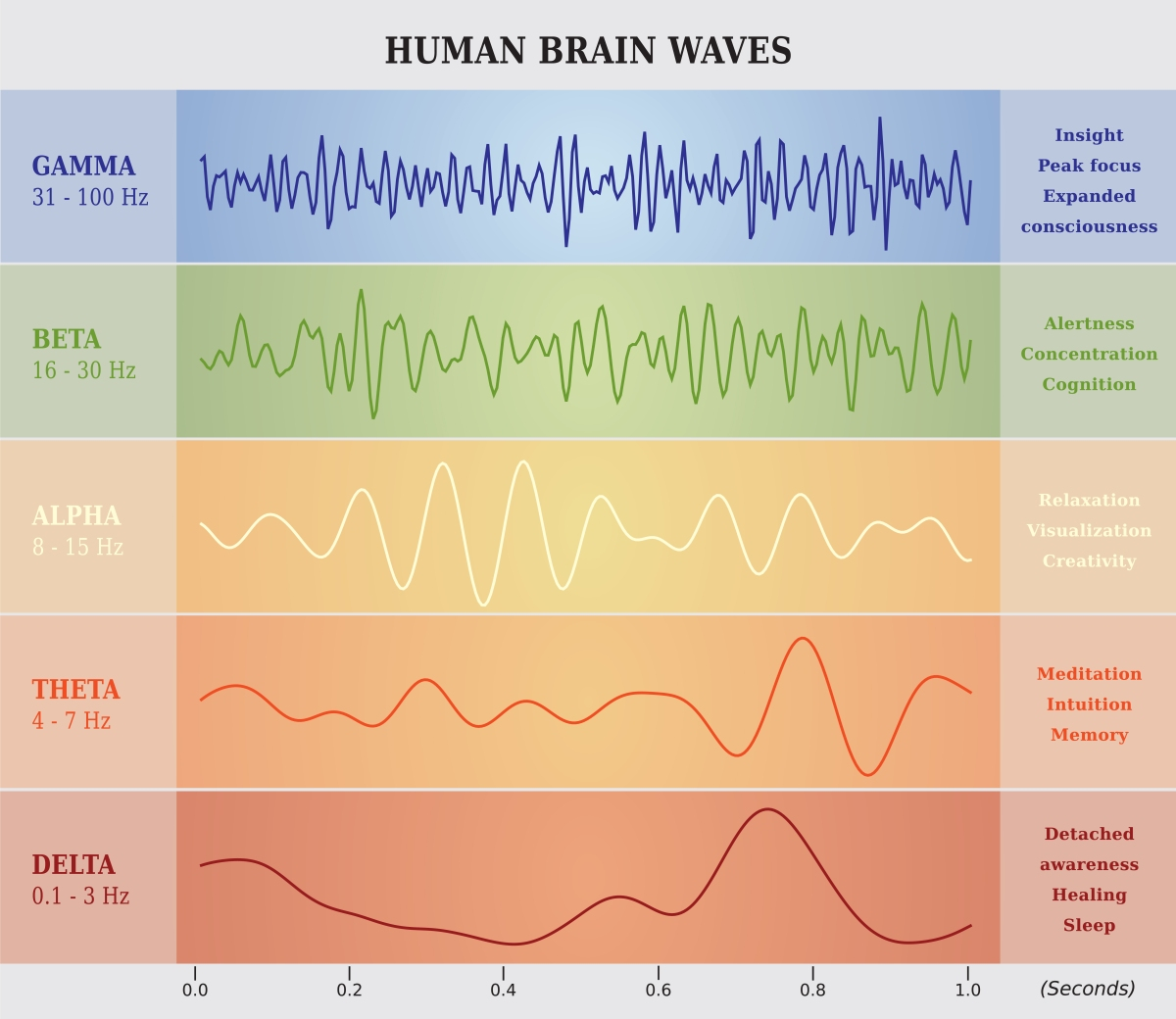 Meditation And The Brain See The Np